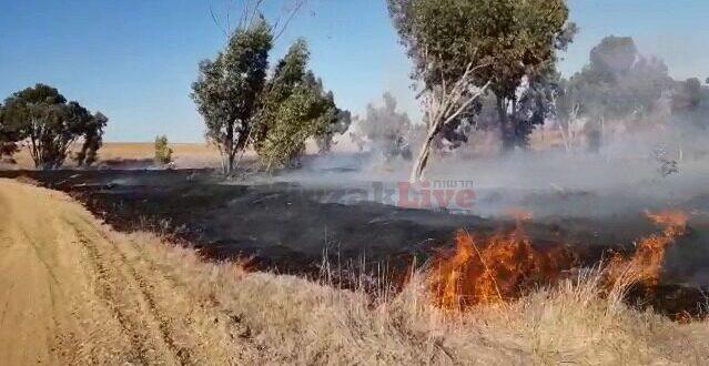 טרור בלוני התבערה נמשך: 2 שריפות ביער בארי וביער כיסופים