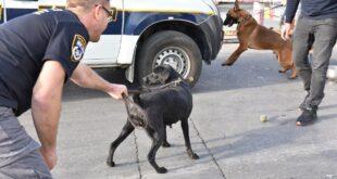 מצטרפים חדשים למשטרת ישראל: 12 כלבים שהגיע...