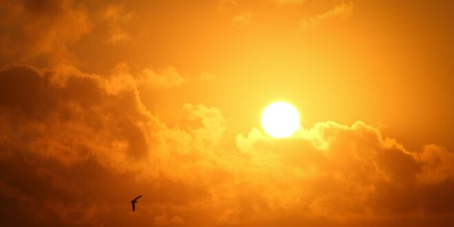 משרד הבריאות מתריע: בימים הקרובים צפוי גל חום כבד