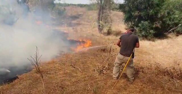 בלון תבערה שהופרח מעזה גרם לשריפה ביער שוקדה