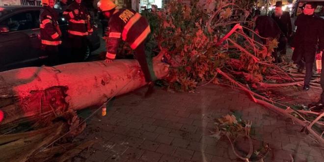 בן 50 נפצע קל-בינוני מפגיעת עץ שקרס עליו בבני ברק