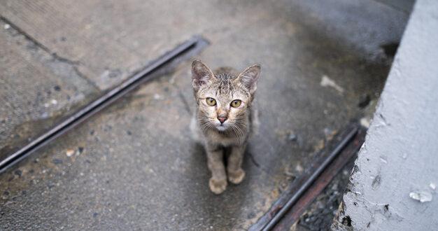 תושב גבעת שמואל חשוד בהרעלת חתולים באמצעות אקונומיקה