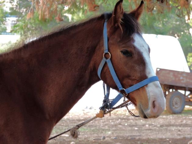 בן 6 נפצע בינוני בחזה לאחר שננשך על ידי סוס בעיר העתיקה בירושלים