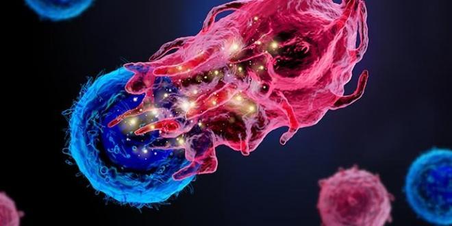 טכנולוגיה חדשה מאפשרת הצצה אל הנעשה בתוך התאים