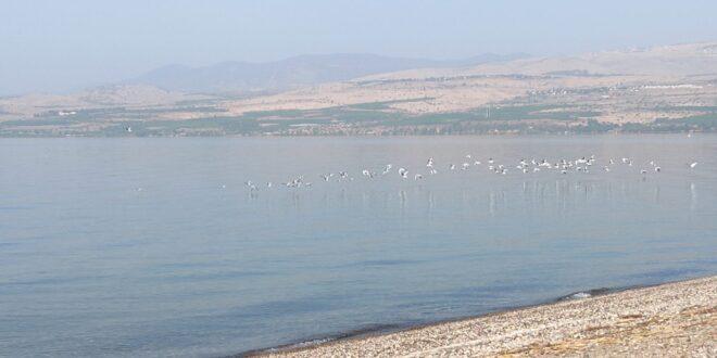 בהיעדר הנופשים בכנרת: החיות ובעלי הכנף חוזרים לחופים