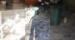 """לוחמי מג""""ב פשטו על לול במושב אליפלט בו גודלו כ-100 כלבי שיצו, בהם כלבי..."""