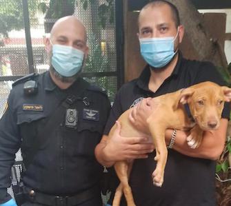 תושב תל אביב כבן 26 חשוד בהתעללות בגורת כלבים