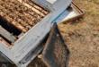3 קטינים נעצרו בחשד להשחתת כוורות דבש וגניבת חלות דבש באזור רמלה