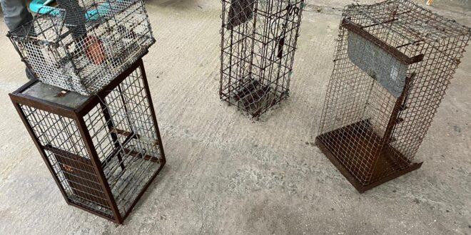 9 תושבי עכברה נעצרו בחשד לגניבת בקר בגליל העליון