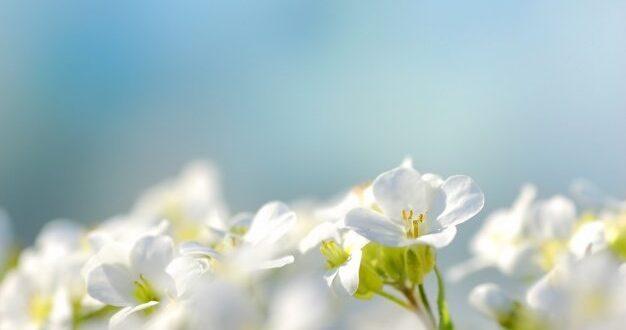 האם צפוי אביב סוער? כמויות המשקעים צפויות להיות גבוהות מהממוצע