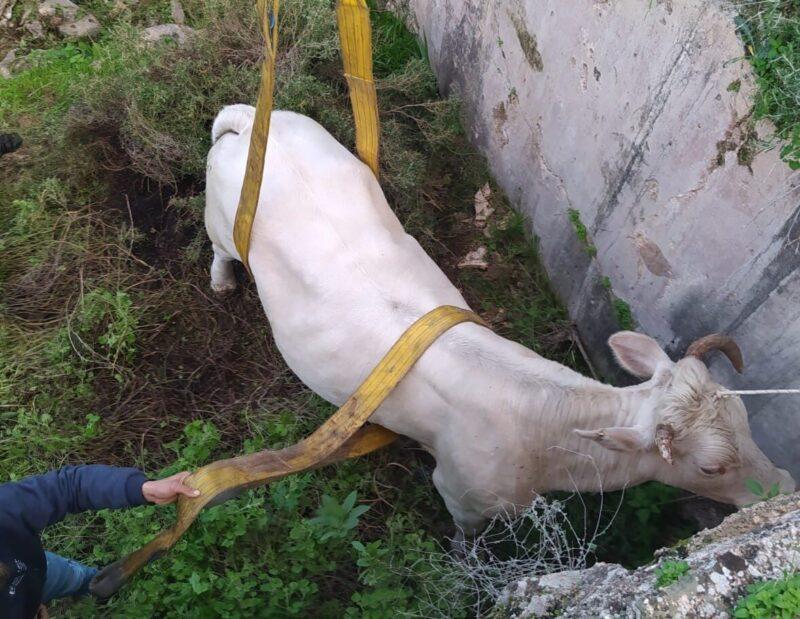 """בג""""צ דחה עתירה נגד הרג בעלי חיים"""