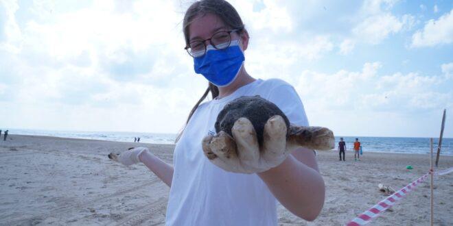 """""""רמזור זיהום החופים"""": דרגת הזיהום יורדת, פעולות הניקוי נמשכות"""