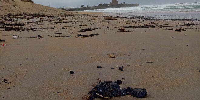 """השרה גמליאל: דליפת נפט בקווי קצא""""א עלולה להיות חמורה ממה שראינו בחופים"""
