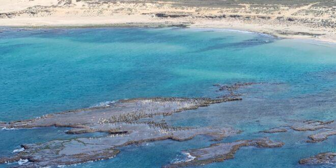 האסון האקולוגי: זפת ממשיך להיפלט לחופים, הציבור מתבקש לא להגיע