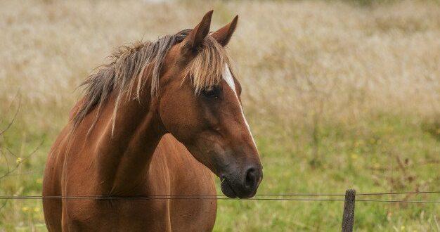 אישום: בן 36 פיתה קטינות לרכב עימו על סוס – וביצע בהן עבירות מין