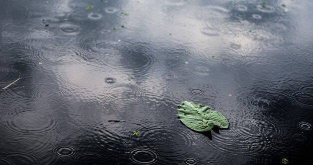 תחזית מזג האוויר לימים הקרובים: ירידה בטמפרטורות וגשם לפרקים