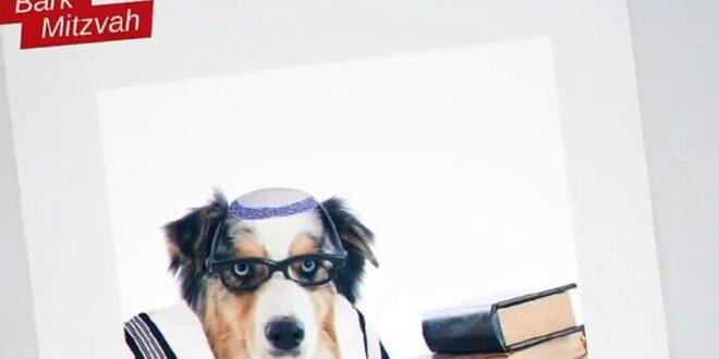 """סערה סביב סרטון הכלבים של יהדות התורה: """"אנו מגיעים לשפל של שנאת אחים"""""""