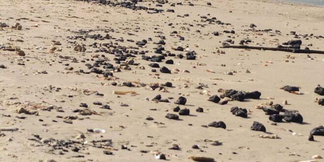 רשות הטבע והגנים: גושי זפת חדשים נראו בחופים תל דור, ניצנים ובית ינאי