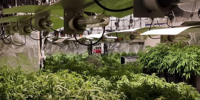מעבדת סמים ובה מאות עציצי מריחואנה נחשפה בדירת מגורים בקריית יערים
