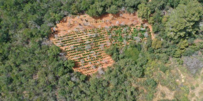 נחשפו חלקות אדמה ששימשו על פי החשד לגידול סמים סמוך לפרדס חנה