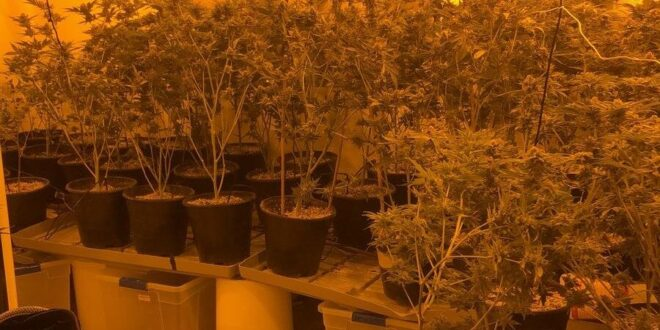 נהריה: מעבדת סמים נחשפה בעיר, בן 31 חשוד בהפעלתה