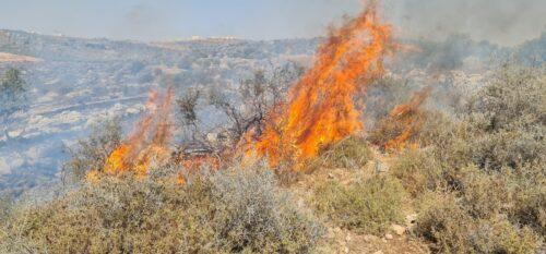 WhatsApp-Image-2021-06-09-at-15.48.07-500x233 שריפה פרצה סמוך לאריאל, צוותי כיבוי אש רבים במקום