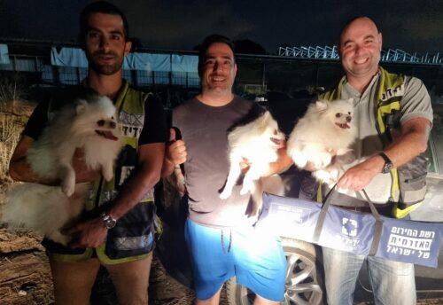 שלושה כלבים ננעלו ברכב