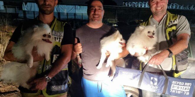 כפר ידידיה: שלושה כלבים ננעלו ברכב לבדם, מתנדבי ידידים חילצו אותם