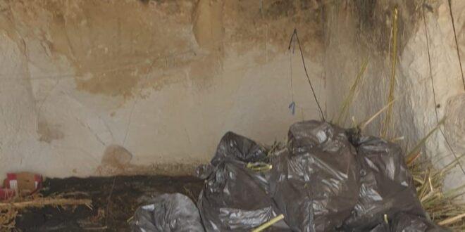 """300 ק""""ג של מריחואנה ועשרה שטחי גידול בנגב נתפסו ע""""י המשטרה"""