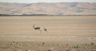 מדבר הקלהרי נמצא באגן יבשתי פנימי בחלקה הדרומי של אפריקה, ומכוסה בשמיכת החול הגדולה בעולם.