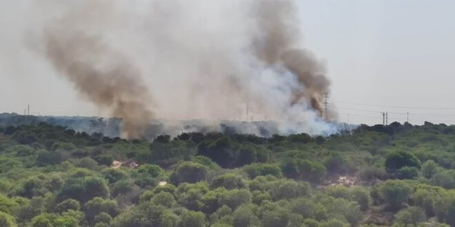 חשד להצתה: שריפת קוצים גדולה משתוללת סמוך לפלמחים