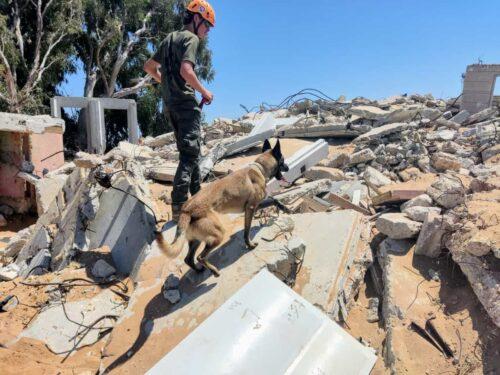 """יכ""""ל מכשירה כלבי הרחה לאיתור וחילוץ נעדרים תחת הריסות"""