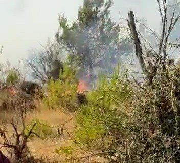 חשד להצתת שריפה בישוב כרמי צור בגוש עציון, לוחמי אש במקום