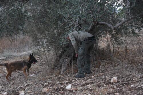 מבצע של 350 שוטרים שפשטו על 63 בתים בכפרים ערבים