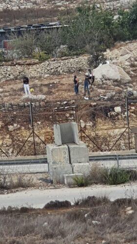 נעצרו 3 פלסטינים בני 17 לאחר שיידו אבנים לעבר לוחמים