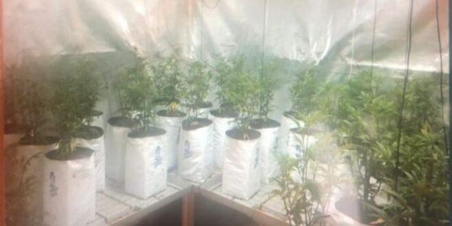 נעצר תושב פרדס חנה בן 43 בחשד בגידול וייצור סמים