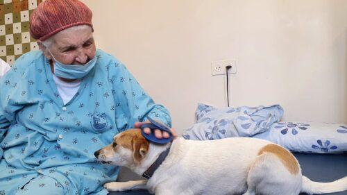 פיילוט לשילוב כלבים במחלקת שיקום גריאטרי של המרכז הרפואי פדה-פוריה