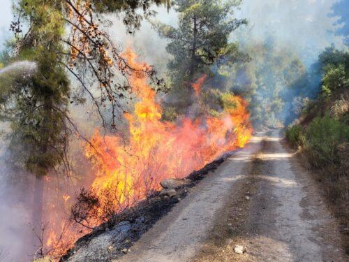 לאחר ההודעה על השגת שליטה בשריפה: מתחדשת האש בהרי ירושלים, מטיילים פונו מהאזור