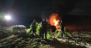 המשטרה איתרה חממת קנאביס ובה כ-2000 שתילים בנגב