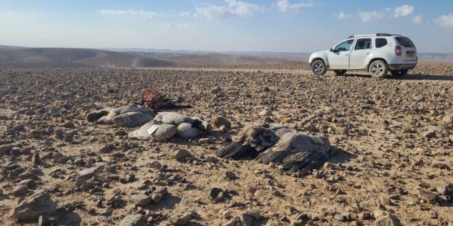 רשות הטבע והגנים: נסיבות מות תשעת הנשרים במדבר יהודה – הרעלה